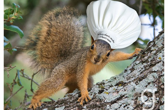 Veverica pekarica