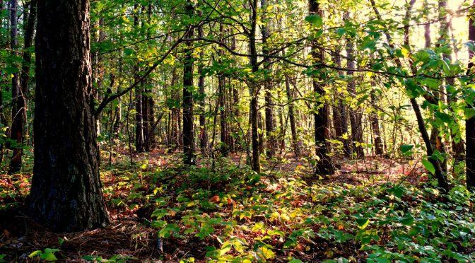 Gozdna pustolovščina (dramska igra)