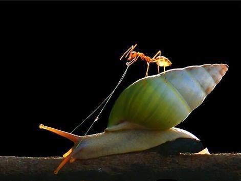 Polž in mravlja