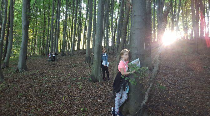 Pouk v gozdu